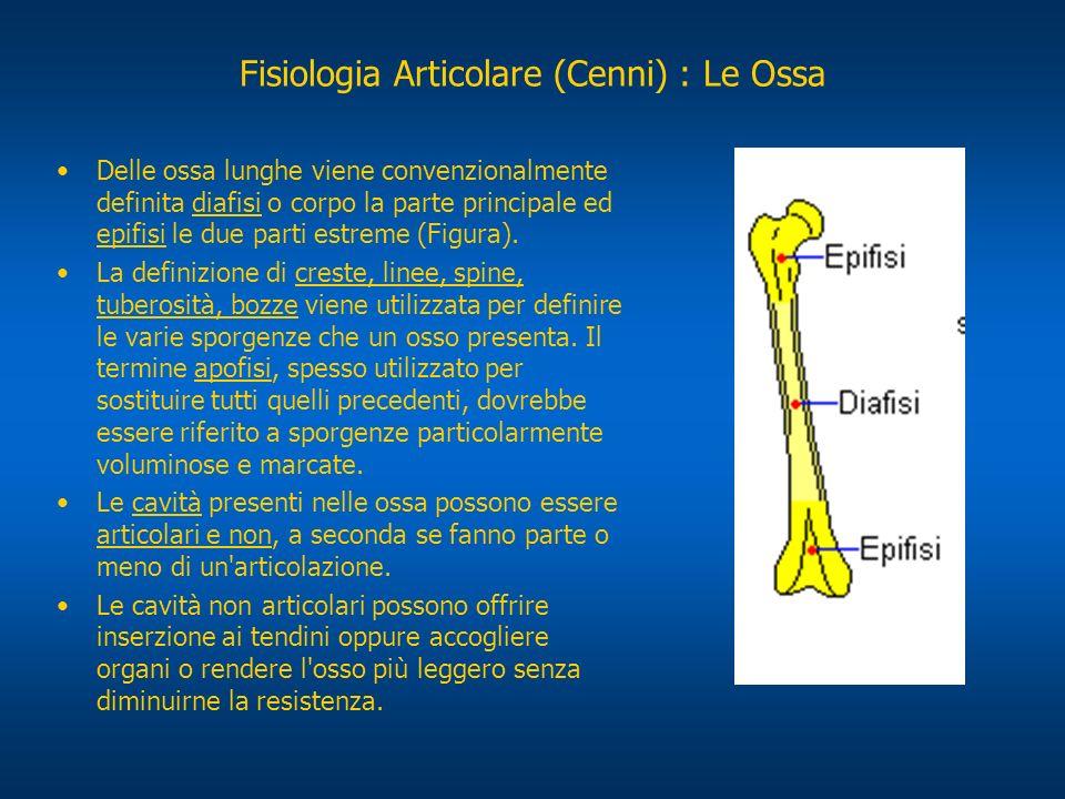 La CONFORMAZIONE INTERNA DELLE OSSA presenta tre tipi di tessuto osseo (Figura): tessuto osseo compatto: risultante dalla sovrapposizione di numerose lamelle ossee; tessuto osseo spugnoso: costituito da tante piccole cavità, delimitate dall intreccio di lamelle ossee; tessuto osseo reticolare: simile al precedente ma con cavità maggiori.