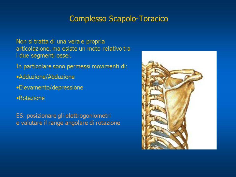 Complesso Scapolo-Toracico Non si tratta di una vera e propria articolazione, ma esiste un moto relativo tra i due segmenti ossei. In particolare sono