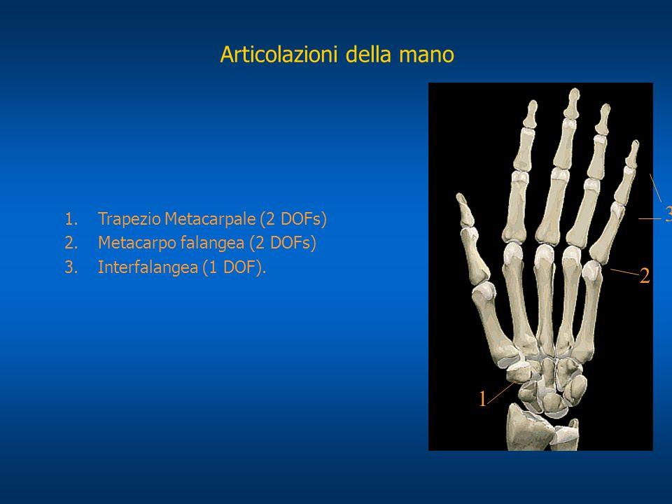 3 2 1 1.Trapezio Metacarpale (2 DOFs) 2.Metacarpo falangea (2 DOFs) 3.Interfalangea (1 DOF). Articolazioni della mano