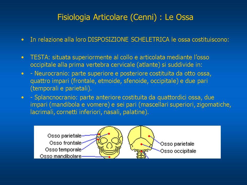 In relazione alla loro DISPOSIZIONE SCHELETRICA le ossa costituiscono: TESTA: situata superiormente al collo e articolata mediante losso occipitale al