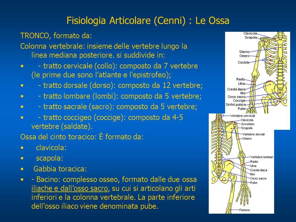 TRONCO, formato da: Colonna vertebrale: insieme delle vertebre lungo la linea mediana posteriore. si suddivide in: - tratto cervicale (collo): compost