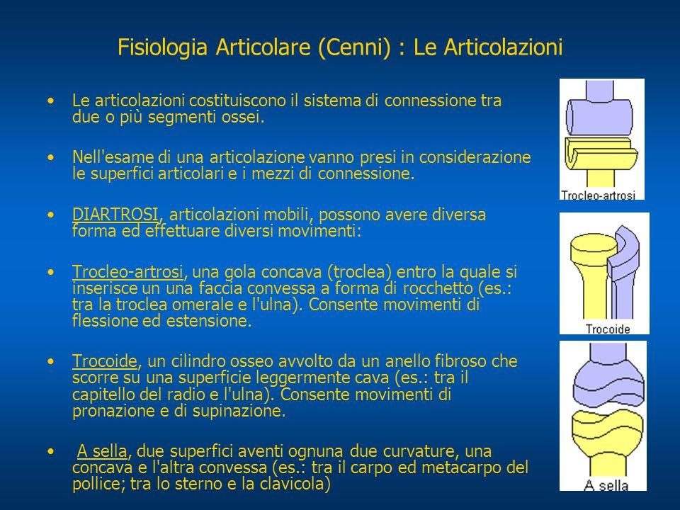 Fisiologia Articolare (Cenni) : Le Articolazioni Le articolazioni costituiscono il sistema di connessione tra due o più segmenti ossei. Nell'esame di
