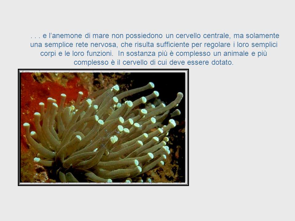 ... Il cetriolo marino,... Sea Cucumber System
