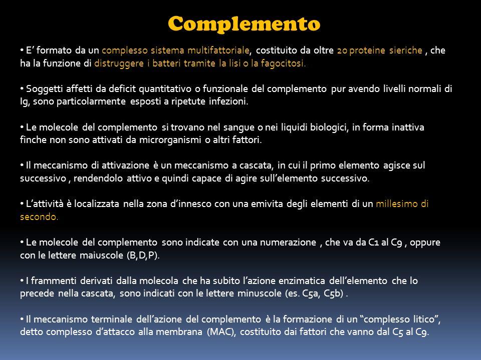 Complemento Il sistema del complemento può essere attivato, nelle sue fasi iniziali fino al fattore centrale C3, mediante 3 vie : Via classica : viene attivata dallinterazione fra l immunocomplesso ( formato da antigeni ed anticorpi delle classi IgG ed IgM ), oppure fra complessi formati da Ig aggregate o denaturate, e il primo componente, il C1q.