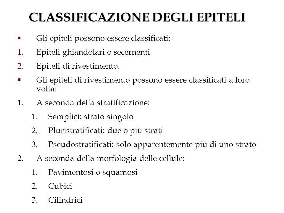 CLASSIFICAZIONE DEGLI EPITELI Gli epiteli possono essere classificati: 1.Epiteli ghiandolari o secernenti 2.Epiteli di rivestimento. Gli epiteli di ri