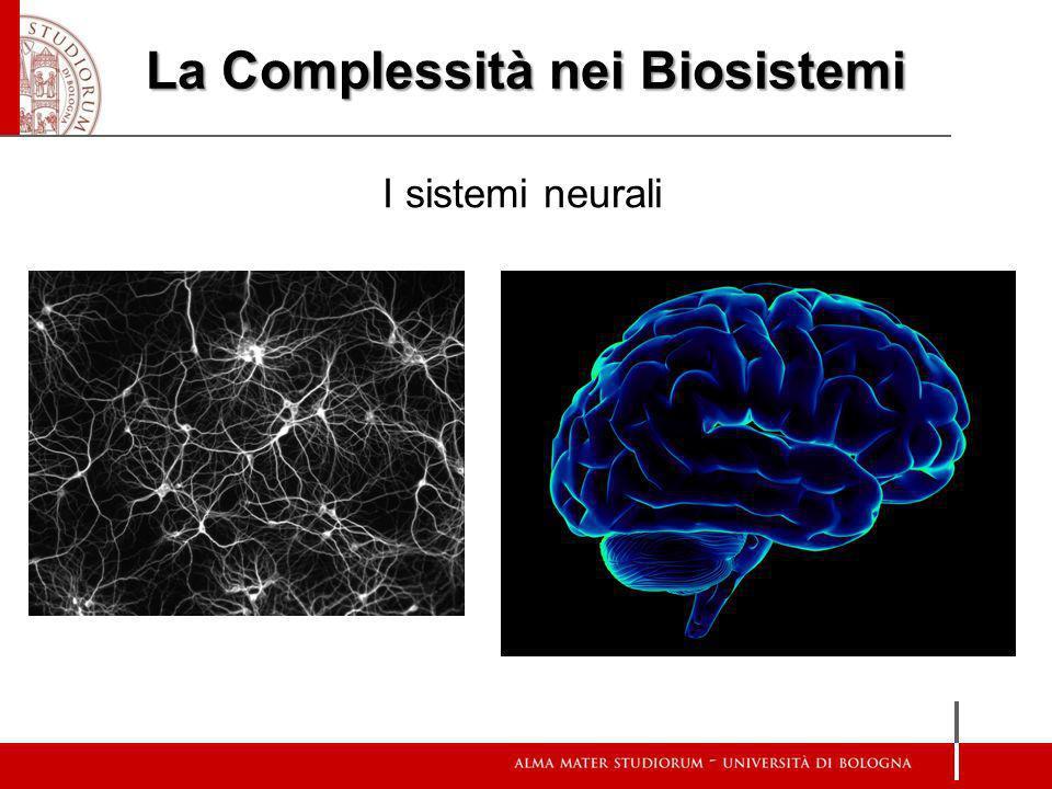 La Complessità nei Biosistemi I sistemi neurali