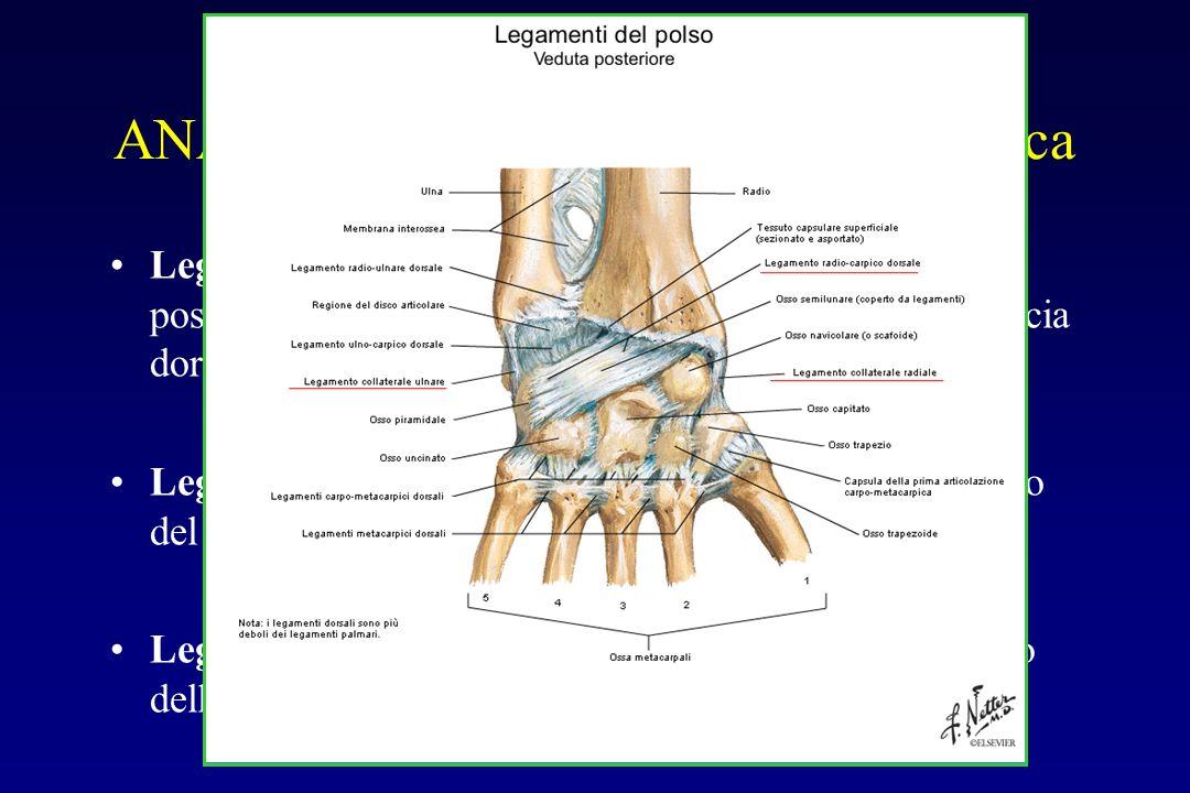 Legamento radiocarpico dorsale: dalla faccia posteriore della superficie articolare del radio alla faccia dorsale di ossa semilunare e piramidale Lega