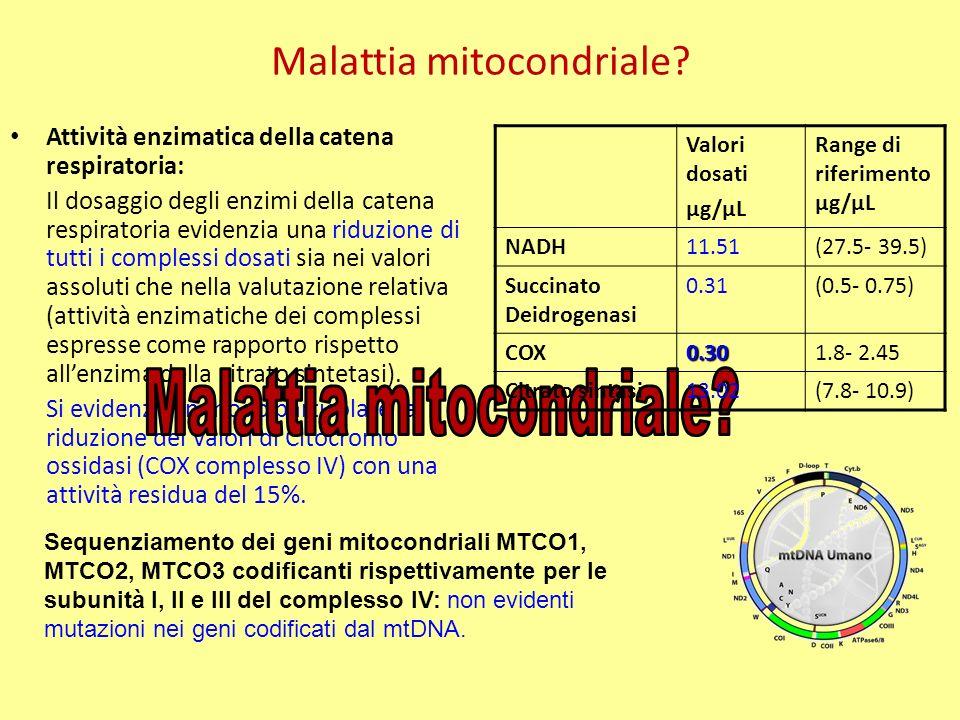Analisi diagnostiche nel sospetto di patologia mitocondriale effettuate Acido lattico nel plasma: aumentato (picco alla spettroscopia) Biopsia muscolare: accumulo di lipidi intracitoplasmatici Analisi biochimica: riduzione in particolare dei livelli della COX Analisi molecolare delle subunità del complesso IV (COX): neg Assenti altri segni indicativi ed orientativi per una specifica patologia mitocondriale (disturbi gastrointestinali, lesioni tipiche dei nuclei della base alla RMN-encefalo, oftalmoplegia progressiva, retinite pigmentosa etc etc) Trattamento