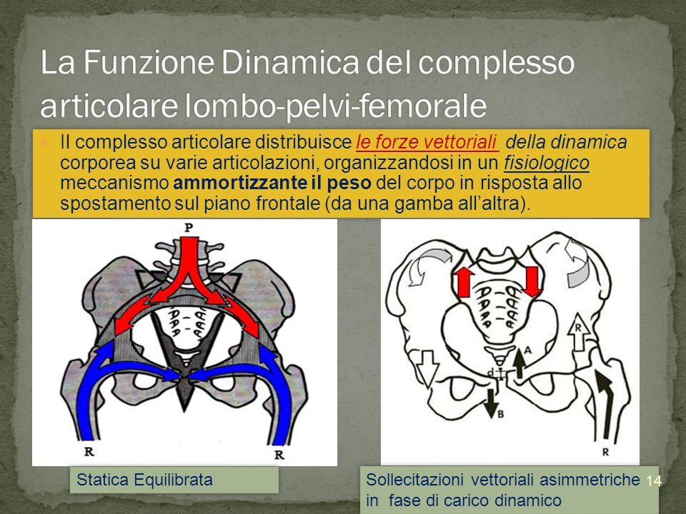 Il complesso articolare distribuisce le forze vettoriali della dinamica corporea su varie articolazioni, organizzandosi in un fisiologico meccanismo a