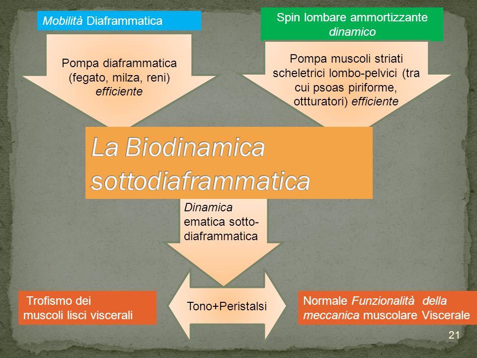Spin lombare ammortizzante dinamico Trofismo dei muscoli lisci viscerali Mobilità Diaframmatica Pompa muscoli striati scheletrici lombo-pelvici (tra c