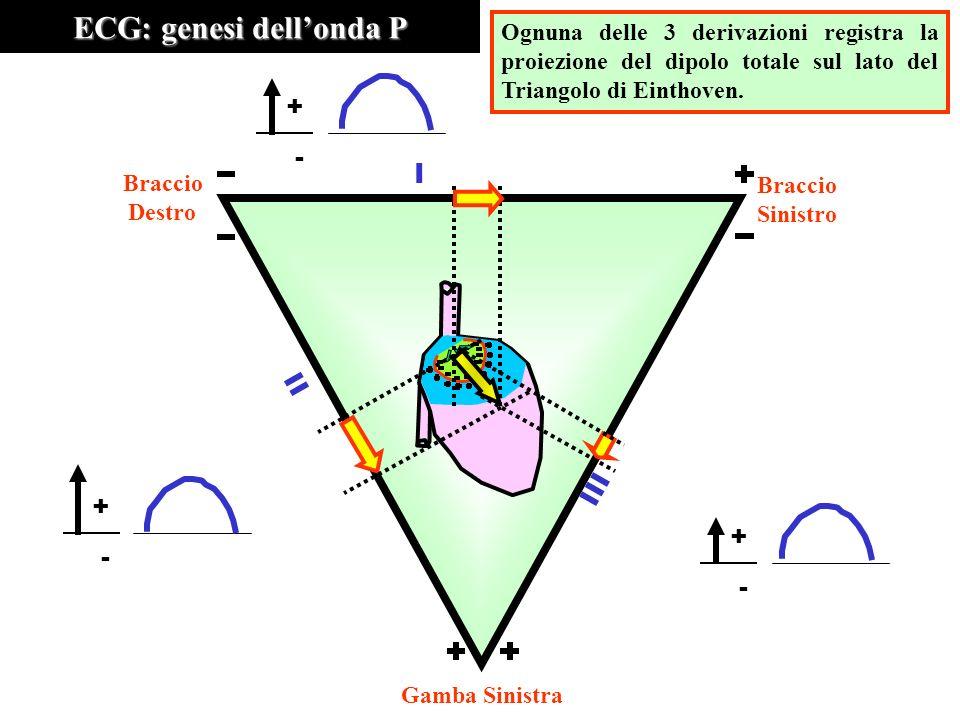 ECG: genesi dellonda P Ognuna delle 3 derivazioni registra la proiezione del dipolo totale sul lato del Triangolo di Einthoven. III II I Braccio Destr