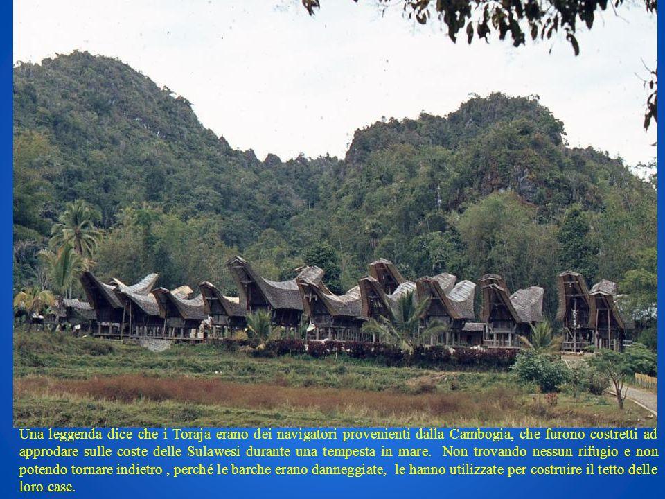 Una leggenda dice che i Toraja erano dei navigatori provenienti dalla Cambogia, che furono costretti ad approdare sulle coste delle Sulawesi durante u