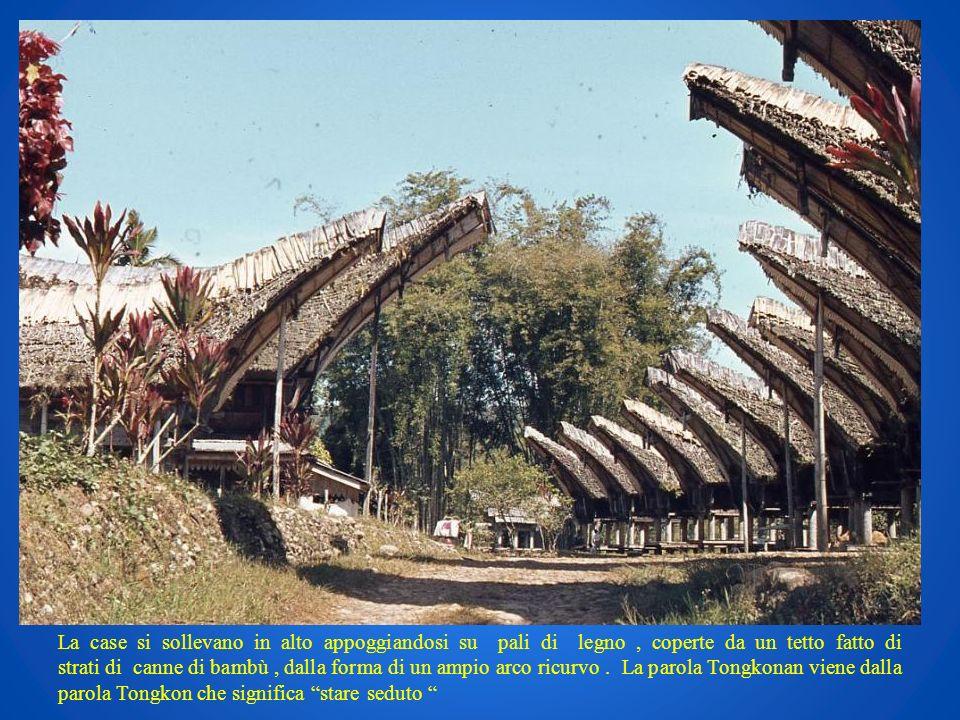 La case si sollevano in alto appoggiandosi su pali di legno, coperte da un tetto fatto di strati di canne di bambù, dalla forma di un ampio arco ricur