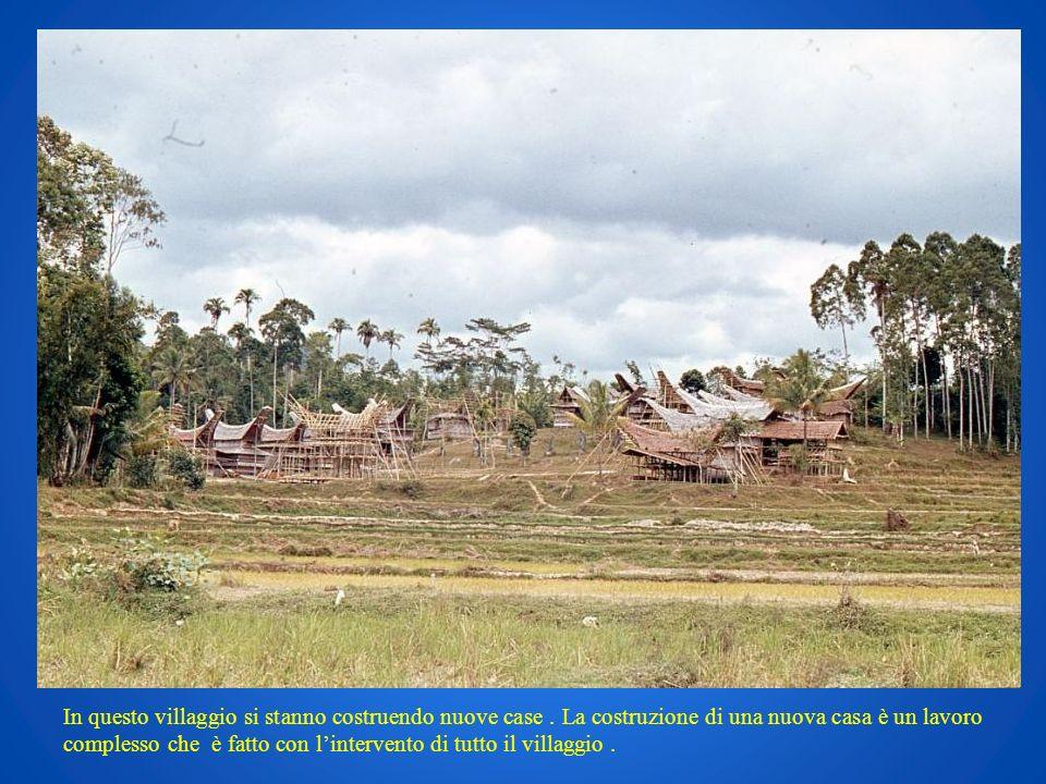 In questo villaggio si stanno costruendo nuove case. La costruzione di una nuova casa è un lavoro complesso che è fatto con lintervento di tutto il vi