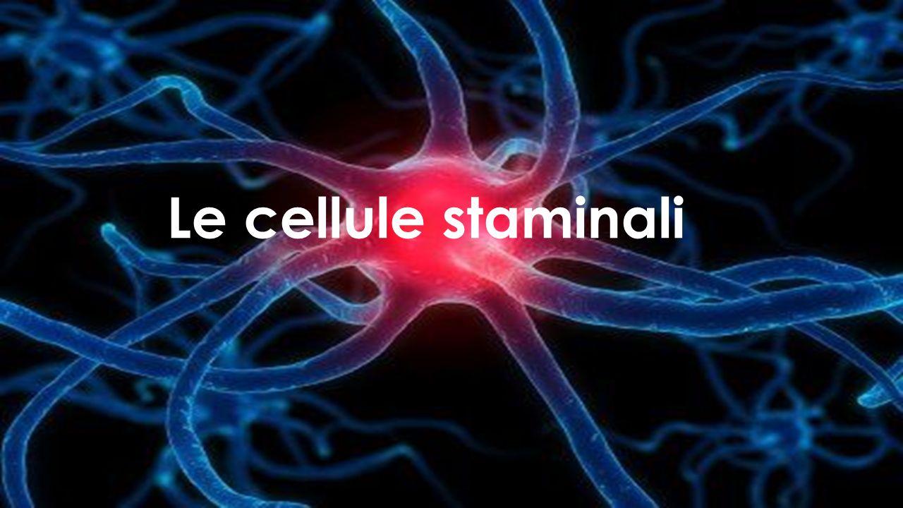 Cosa sono le cellule staminali.