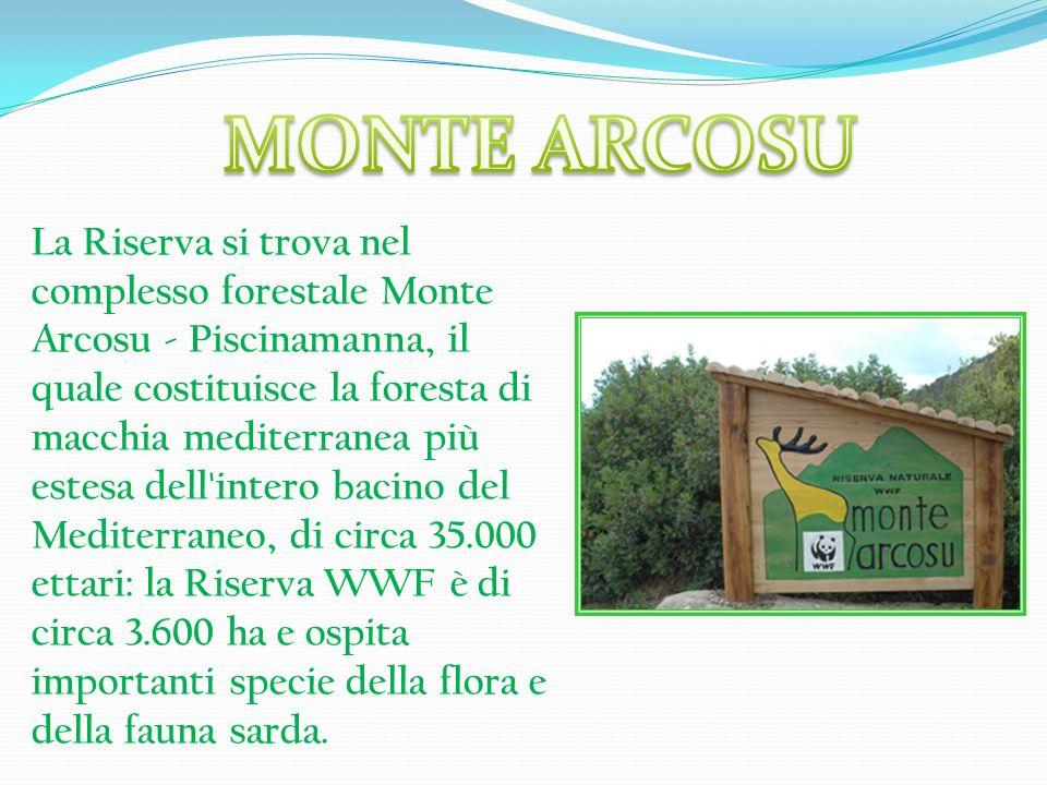 La Riserva si trova nel complesso forestale Monte Arcosu - Piscinamanna, il quale costituisce la foresta di macchia mediterranea più estesa dell'inter