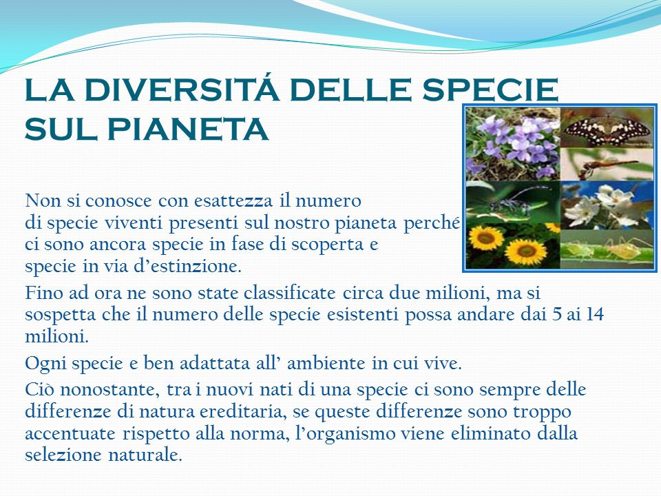 LA DIVERSITÁ DELLE SPECIE SUL PIANETA Non si conosce con esattezza il numero di specie viventi presenti sul nostro pianeta perché ci sono ancora speci