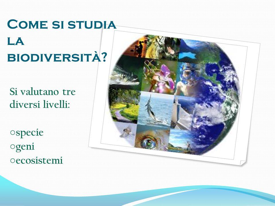 La biodiversità indica una misura della varietà di specie animali e vegetali nella biosfera; essa è il risultato di lunghi processi evolutivi.