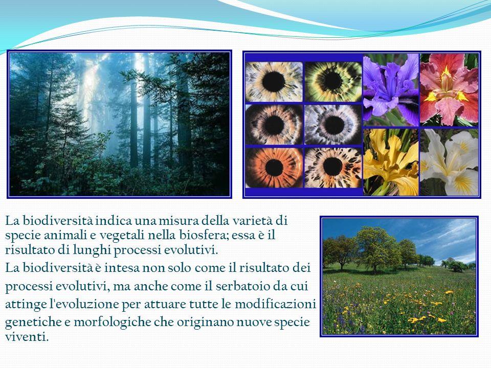 La biodiversità indica una misura della varietà di specie animali e vegetali nella biosfera; essa è il risultato di lunghi processi evolutivi. La biod