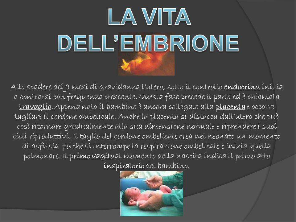 endocrino travaglioplacenta primovagito inspiratorio Allo scadere dei 9 mesi di gravidanza lutero, sotto il controllo endocrino, inizia a contrarsi con frequenza crescente.