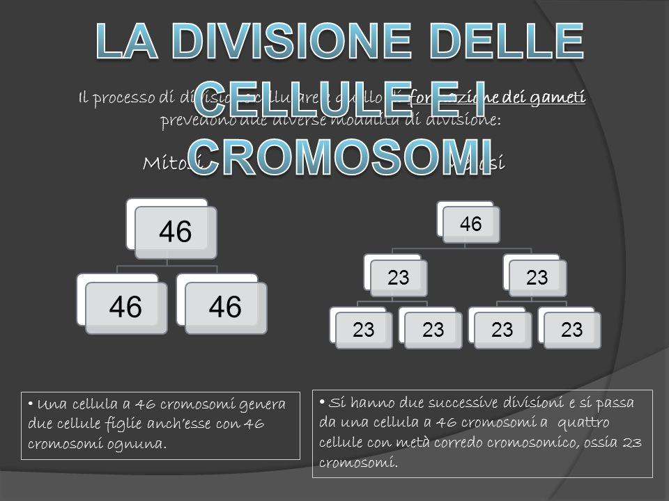 MitosiMeiosi Una cellula a 46 cromosomi genera due cellule figlie anchesse con 46 cromosomi ognuna.