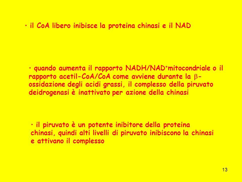 13 il CoA libero inibisce la proteina chinasi e il NAD quando aumenta il rapporto NADH/NAD + mitocondriale o il rapporto acetil-CoA/CoA come avviene d