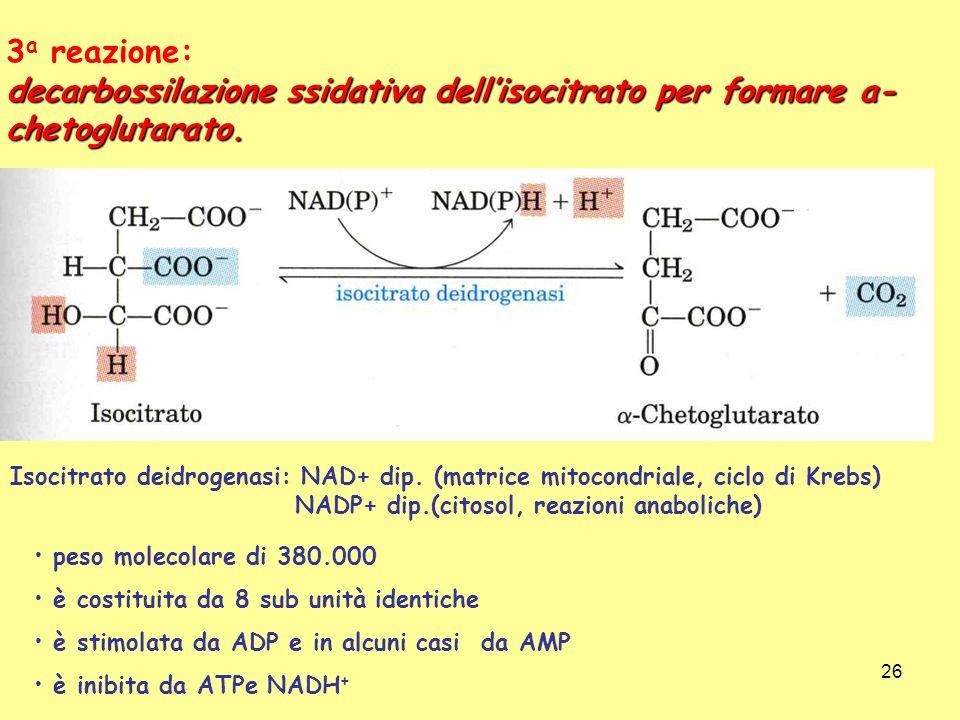 26 3 a reazione: decarbossilazione ssidativa dellisocitrato per formare a- chetoglutarato. Isocitrato deidrogenasi: NAD+ dip. (matrice mitocondriale,