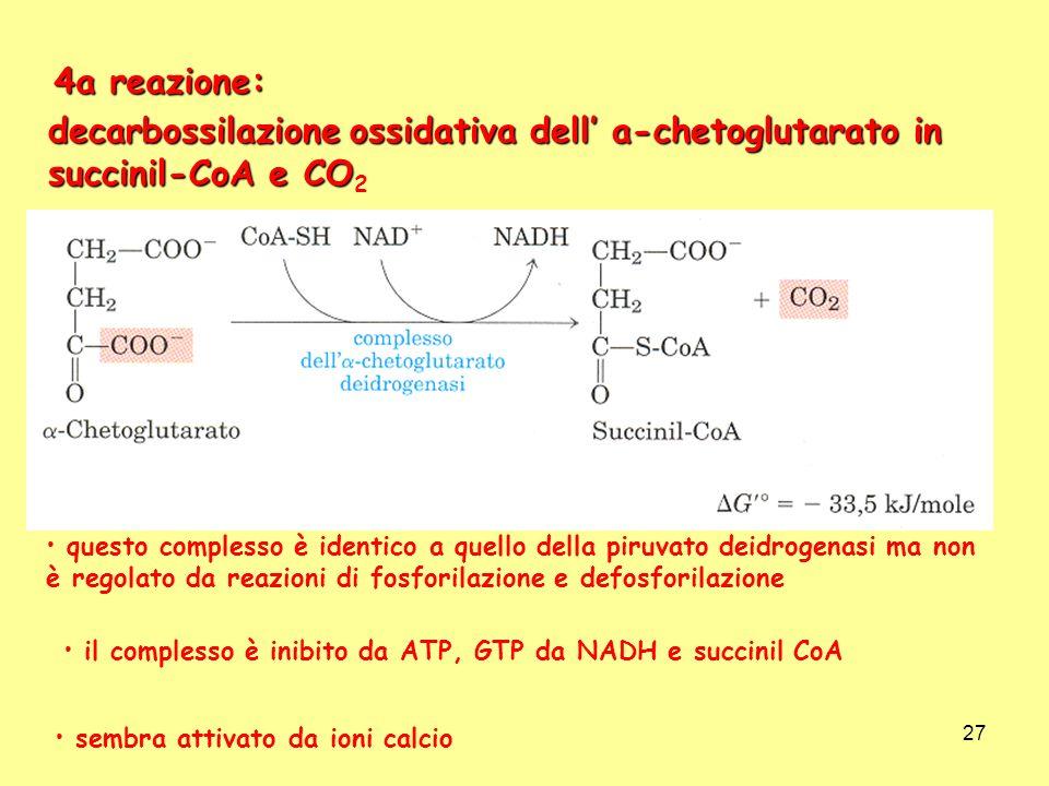 27 4a reazione: decarbossilazione ossidativa dell a-chetoglutarato in succinil-CoA e CO decarbossilazione ossidativa dell a-chetoglutarato in succinil