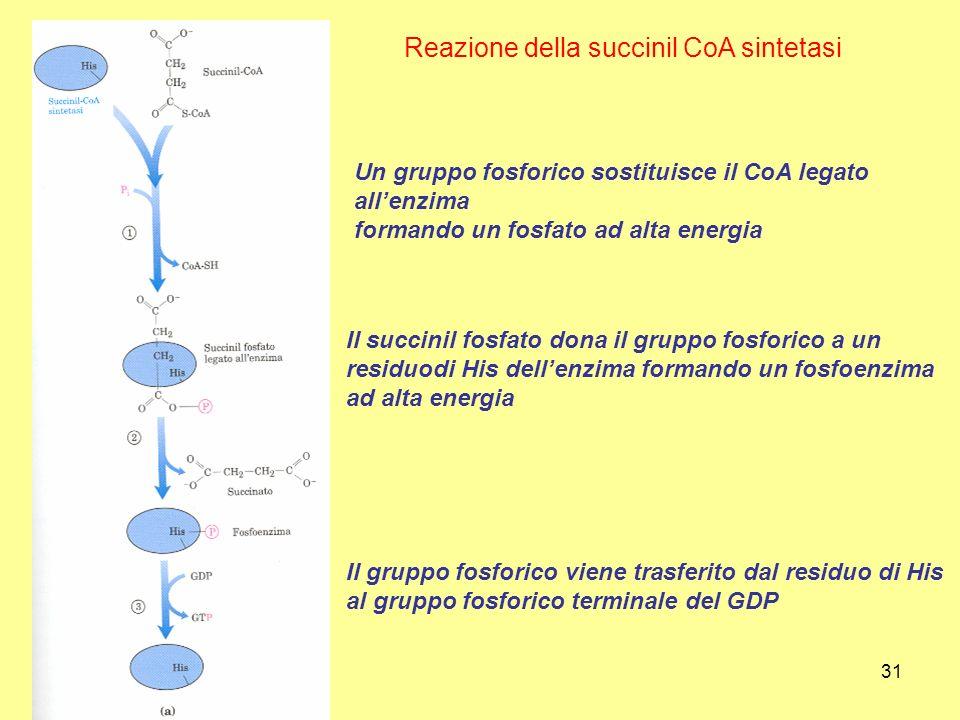 31 Reazione della succinil CoA sintetasi Un gruppo fosforico sostituisce il CoA legato allenzima formando un fosfato ad alta energia Il succinil fosfa