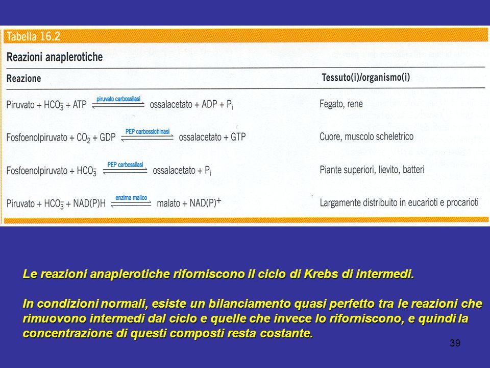39 Le reazioni anaplerotiche riforniscono il ciclo di Krebs di intermedi. In condizioni normali, esiste un bilanciamento quasi perfetto tra le reazion