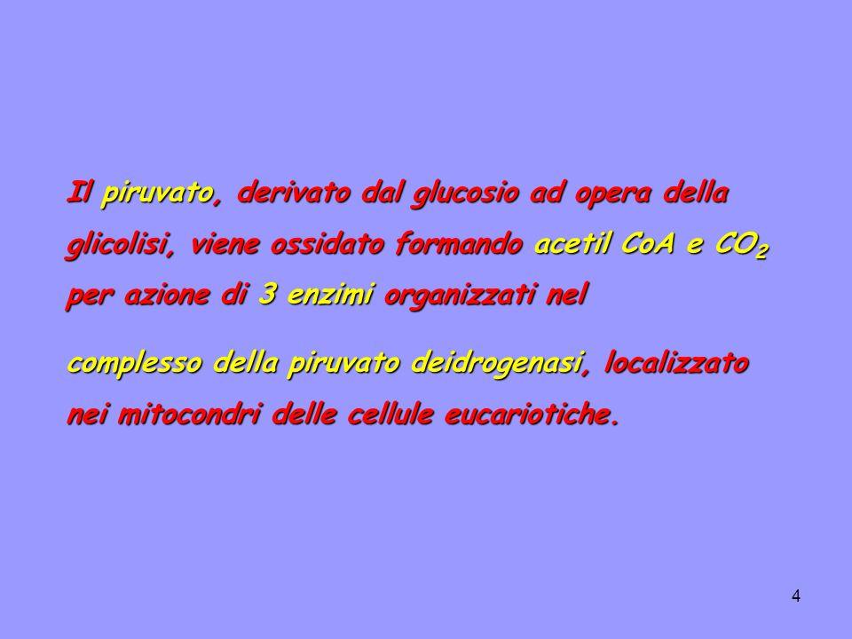 65 funziona in condizioni vicine all equilibrio, per cui la velocità di consumo del citrato dipende dall attività: L aconitasi funziona in condizioni vicine all equilibrio, per cui la velocità di consumo del citrato dipende dall attività: 1.dell isocitrato deidrogenasi NAD+-dipendente, che in vitro viene fortemente inibita dal suo prodotto NADH.