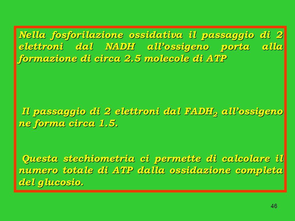 46 Nella fosforilazione ossidativa il passaggio di 2 elettroni dal NADH allossigeno porta alla formazione di circa 2.5 molecole di ATP Il passaggio di