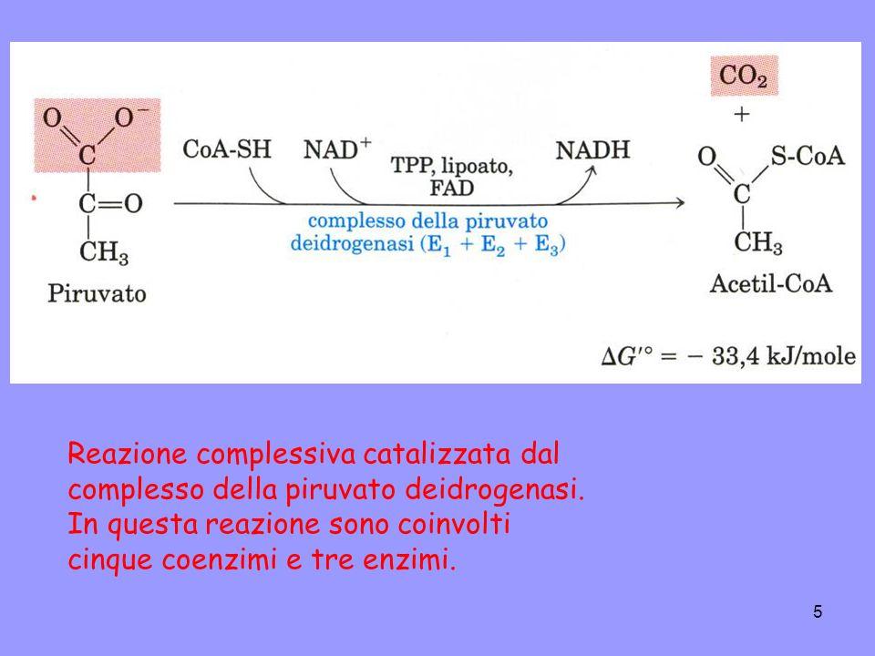 6 Reazione complessiva catalizzata dal complesso della piruvato deidrogenasi: La decarbossilazione ossidativa processo di ossidazione irreversibile: il gruppo carbossilico viene rimosso dal piruvato sotto forma di una molecola di CO2, e i 2 atomi di carbonio che restano diventano il gruppo acetilico legato al CoA.