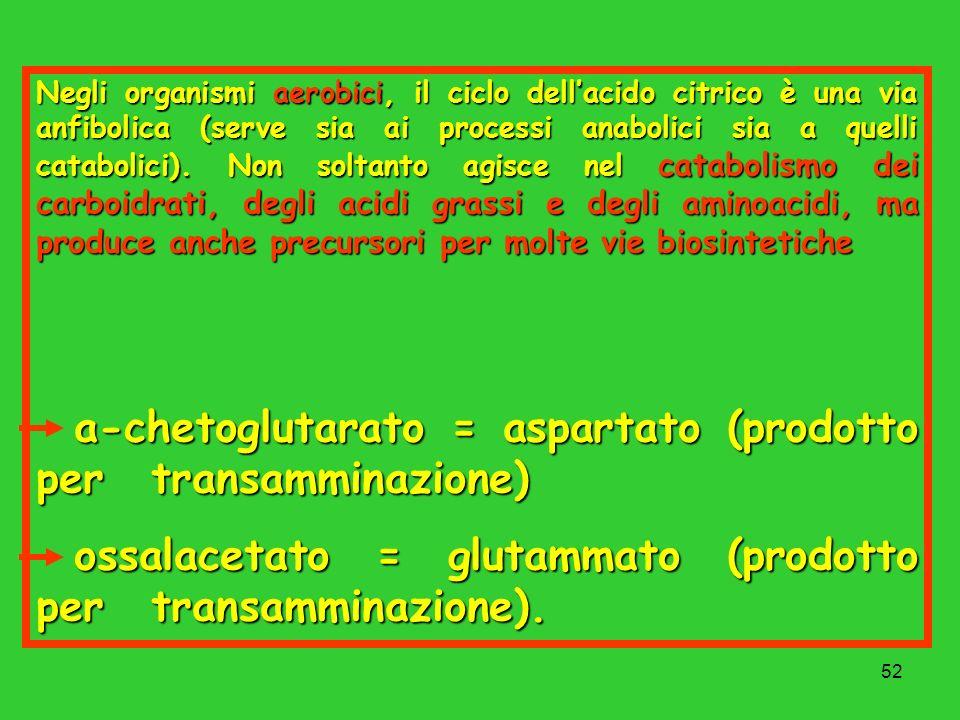 52 Negli organismi aerobici, il ciclo dellacido citrico è una via anfibolica (serve sia ai processi anabolici sia a quelli catabolici). Non soltanto a