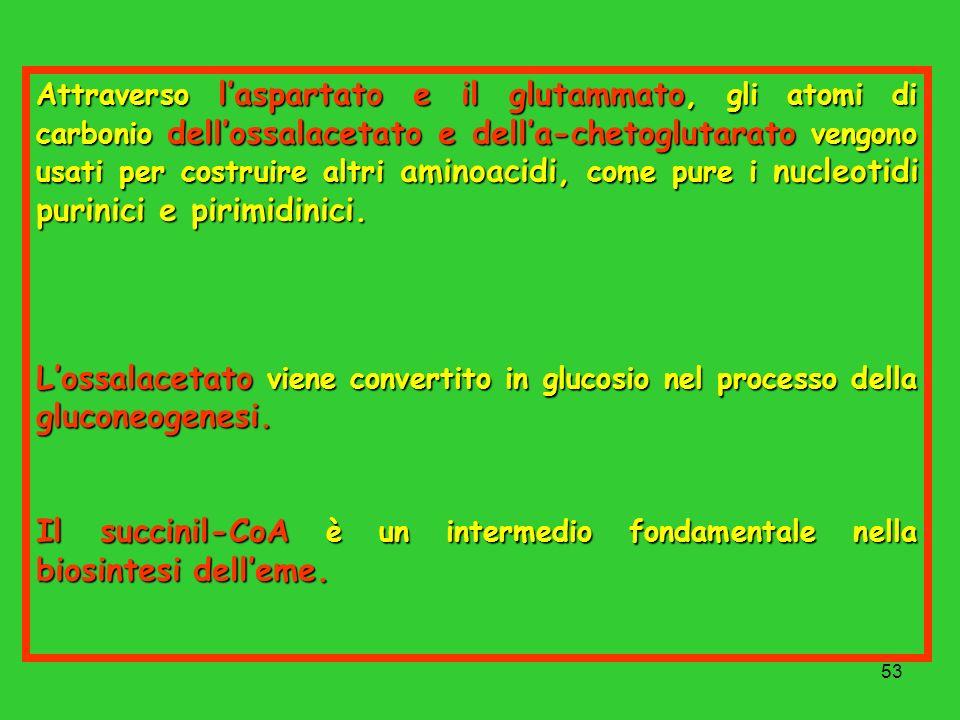53 Attraverso laspartato e il glutammato, gli atomi di carbonio dellossalacetato e della-chetoglutarato vengono usati per costruire altri aminoacidi,