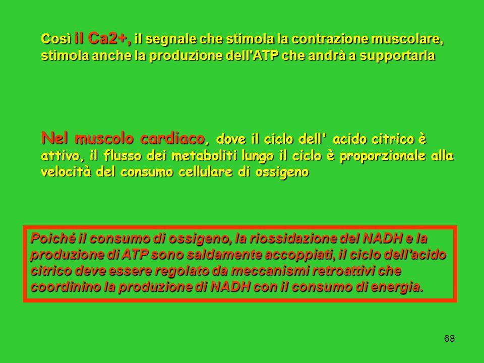 68 Così il Ca2+, il segnale che stimola la contrazione muscolare, stimola anche la produzione dell'ATP che andrà a supportarla Nel muscolo cardiaco, d