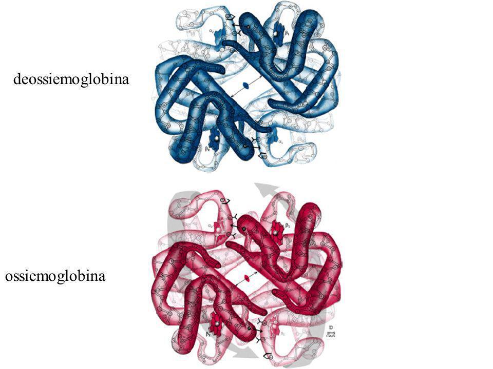 deossiemoglobina ossiemoglobina