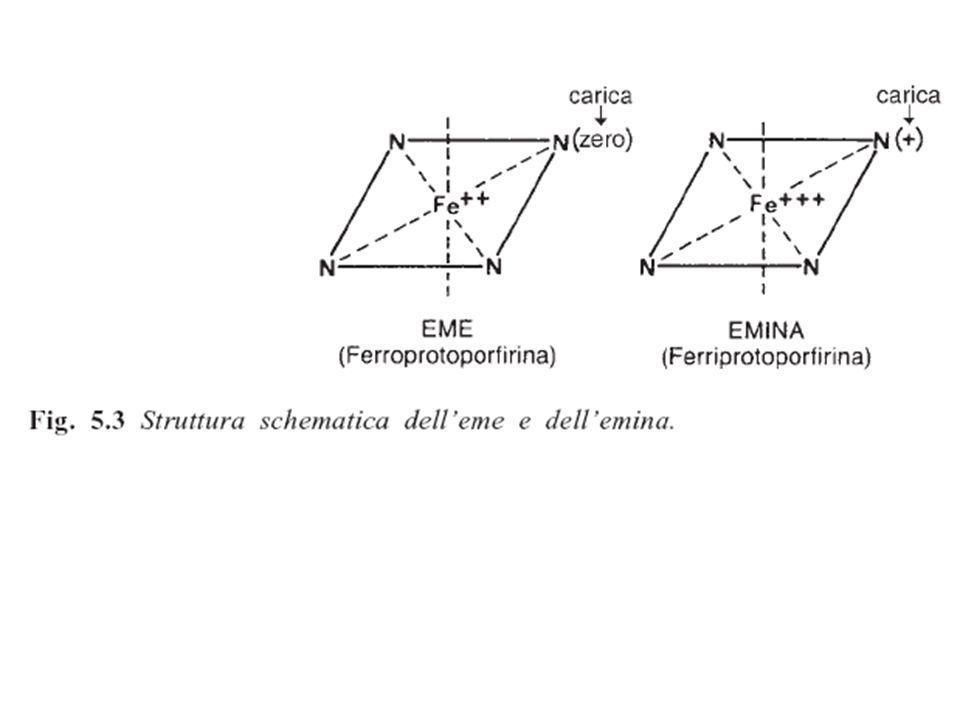 Protoporfirina IX + ferro = eme (ferroprotoeme) 1,3,5,8 metil 2,4 vinil 6,7 propionato Sostituenti sui carboni degli anelli pirrolici nella protoporfirina IX