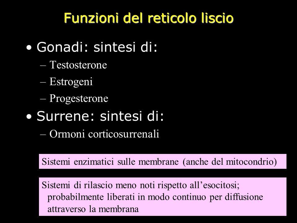 Funzioni del reticolo liscio Gonadi: sintesi di: –Testosterone –Estrogeni –Progesterone Surrene: sintesi di: –Ormoni corticosurrenali Sistemi enzimati