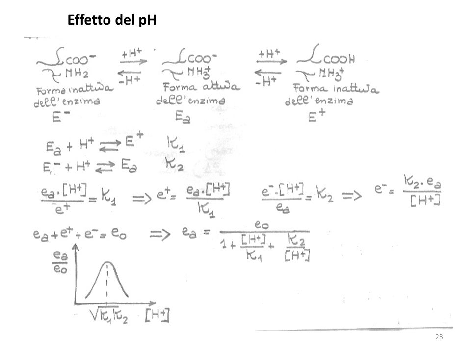 Effetto del pH 23