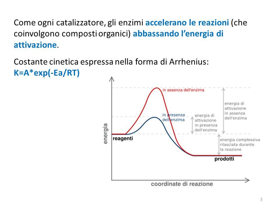 Come ogni catalizzatore, gli enzimi accelerano le reazioni (che coinvolgono composti organici) abbassando lenergia di attivazione.