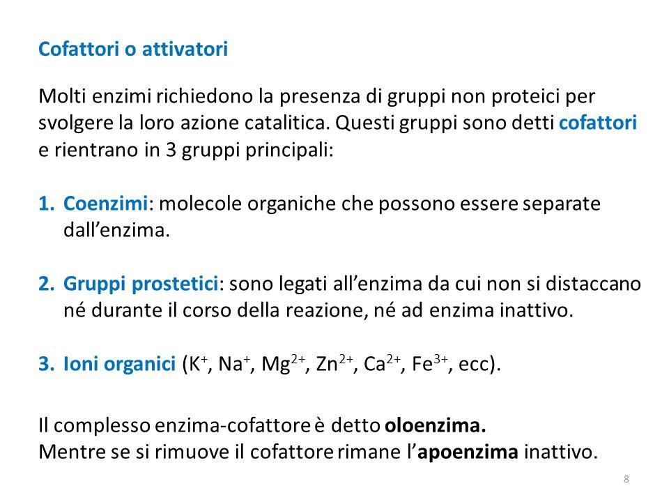 Cofattori o attivatori Molti enzimi richiedono la presenza di gruppi non proteici per svolgere la loro azione catalitica.