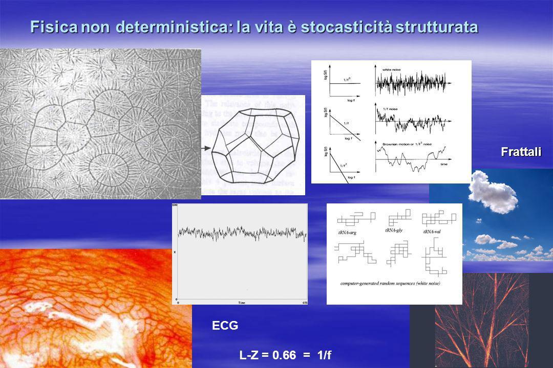 ECG L-Z = 0.66 = 1/f Fisica non deterministica: la vita è stocasticità strutturata Frattali
