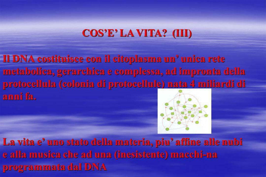 COSE LA VITA? (III) Il DNA costituisce con il citoplasma un unica rete metabolica, gerarchica e complessa, ad impronta della protocellula (colonia di