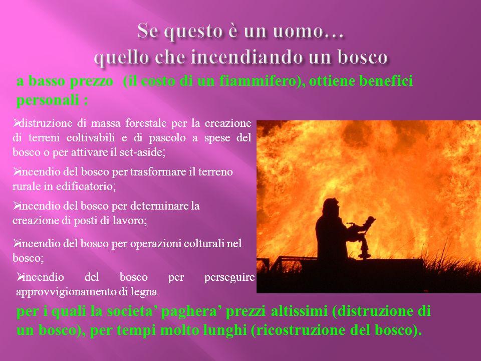 Piromania II piromane è una persona che dà fuoco a qualsiasi oggetto per scaricare la sua angoscia interiore .