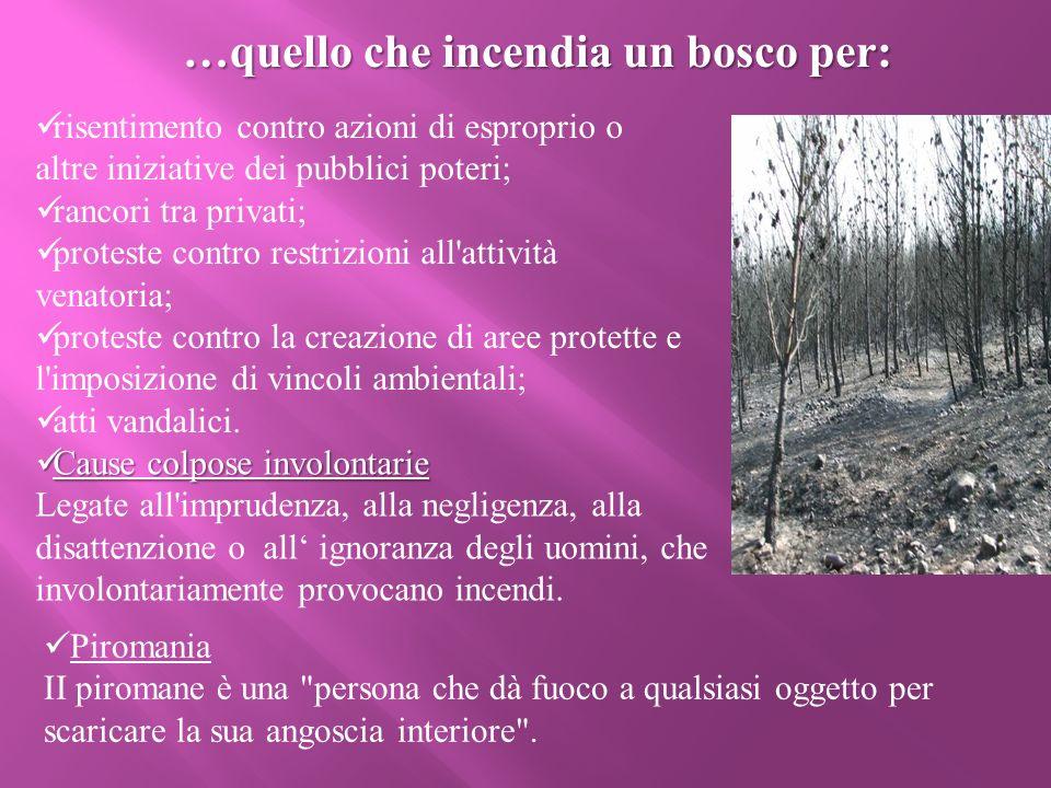 ll patrimonio di diversità biologica che va distrutto negli incendi è immenso.