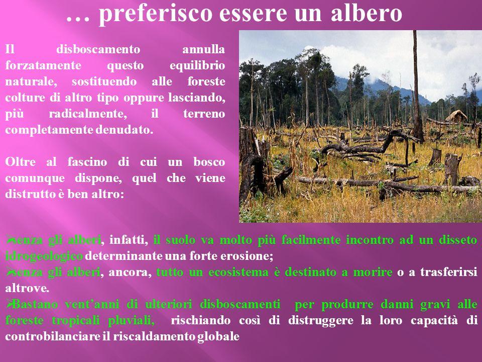 senza gli alberi, infatti, il suolo va molto più facilmente incontro ad un disseto idrogeologico determinante una forte erosione; senza gli alberi, an
