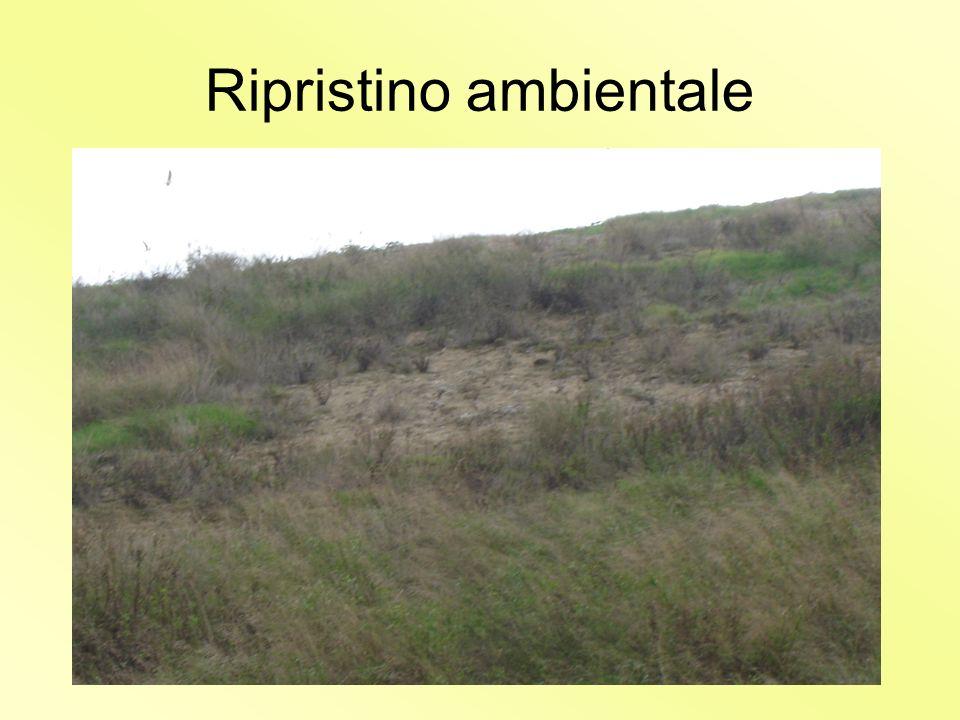 16 Il ripristino ambientale Il ripristino ambientale consiste essenzialmente nella copertura dei rifiuti con un adeguato spessore di terreno naturale,