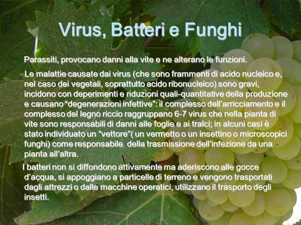 Virus, Batteri e Funghi Parassiti, provocano danni alla vite e ne alterano le funzioni. Parassiti, provocano danni alla vite e ne alterano le funzioni