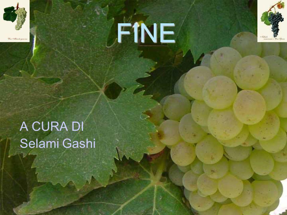FINE A CURA DI Selami Gashi